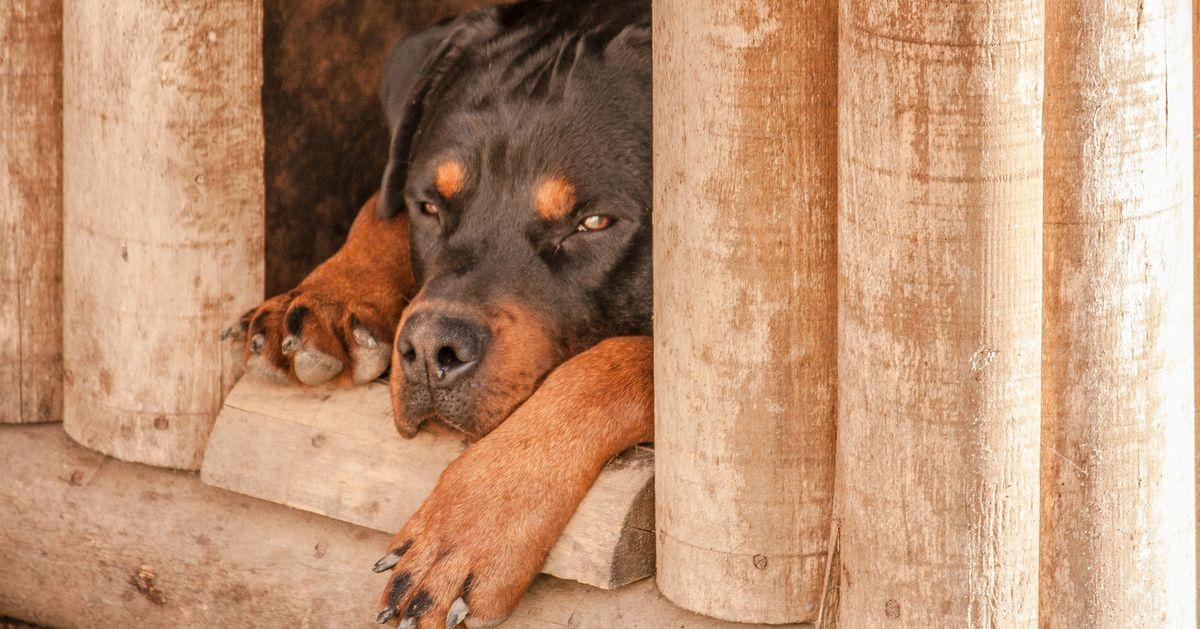 wskazówki jak zrobic budę dla psa