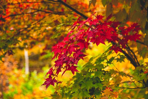 Jak szybko zgrabić liście bez schylania?