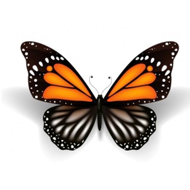 Motyl, którego wybierzesz, może ujawnić ukryte strony Twojej osobowości