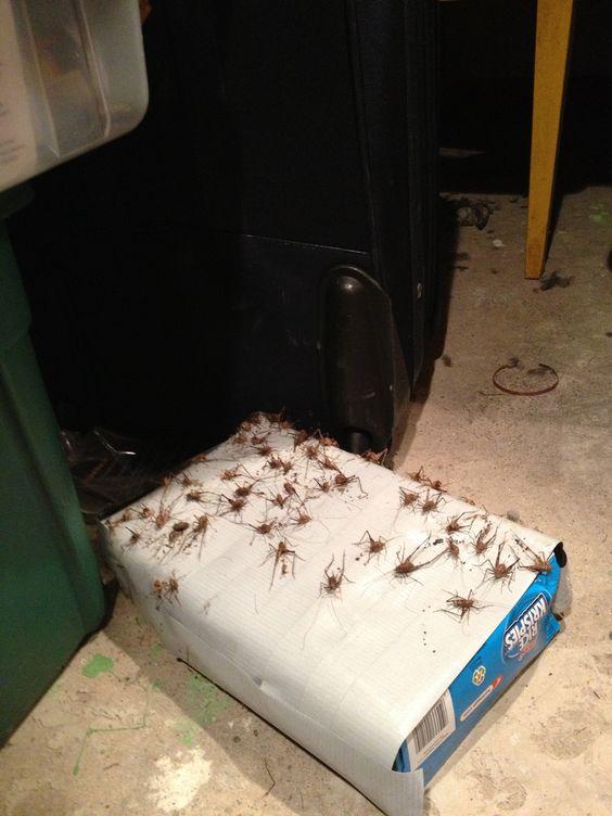 sposoby na odstraszanie pająków - pułapka