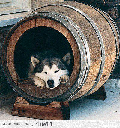 buda dla psa - inspiracje 2