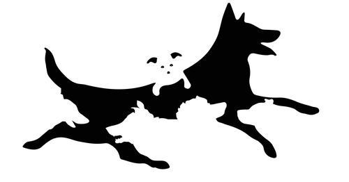 Liczba psów jaką zobaczysz, ilustruje Twój wiek mentalny. Zdziwisz się ile lat ma Twój umysł