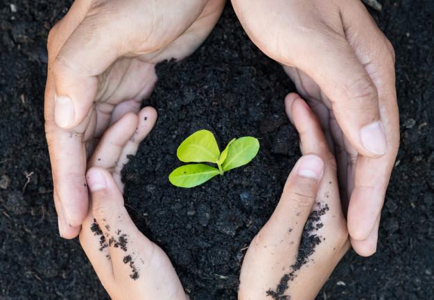 ekologiczna wyszukiwarka - sadzonka