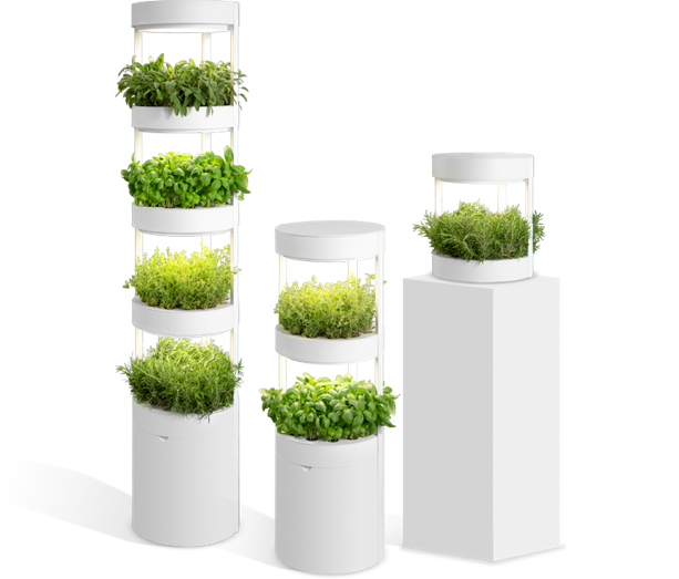 sadzenie roślin bez użycia gleby 3