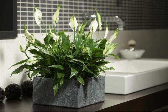 Jakie kwiaty do łazienki bez okna? Znamy idealne gatunki roślin