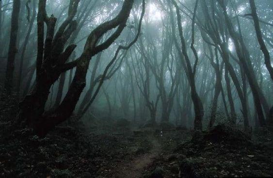 hoiu forest