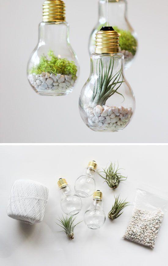rośliny w żarówce