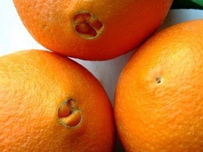 pomarańcza z pępkiem