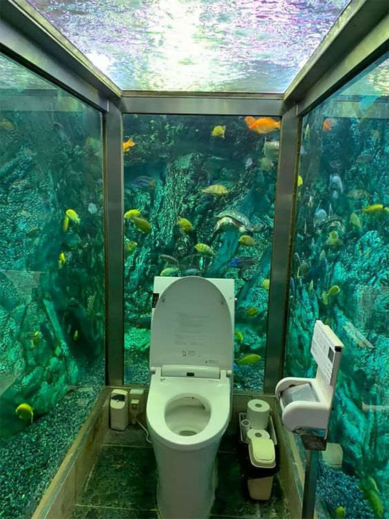 toaleta akwarium