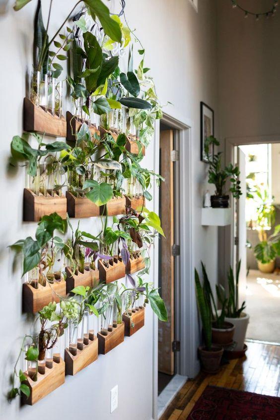 rośliny hydroponiczne