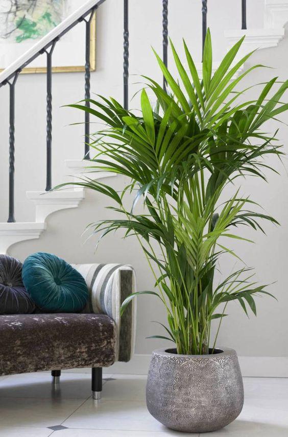duża roślina w doniczce