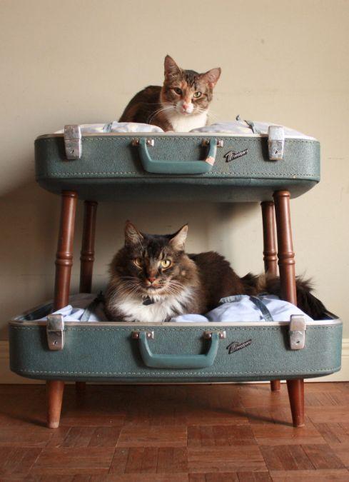 koty w walizkach