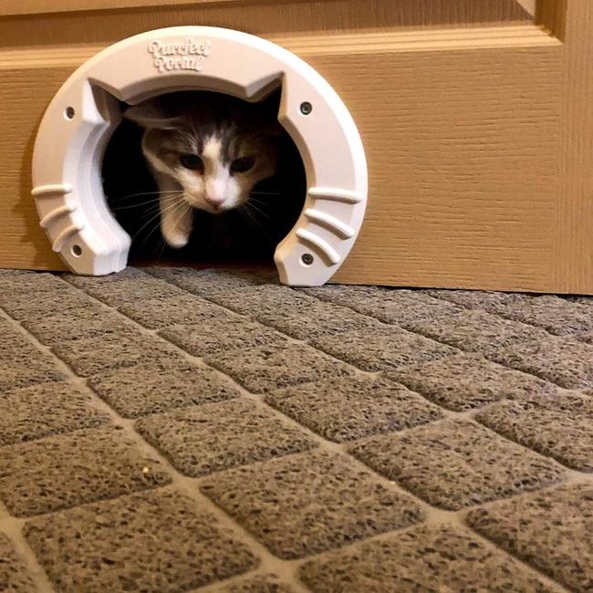 otwór w drzwiach dla kota