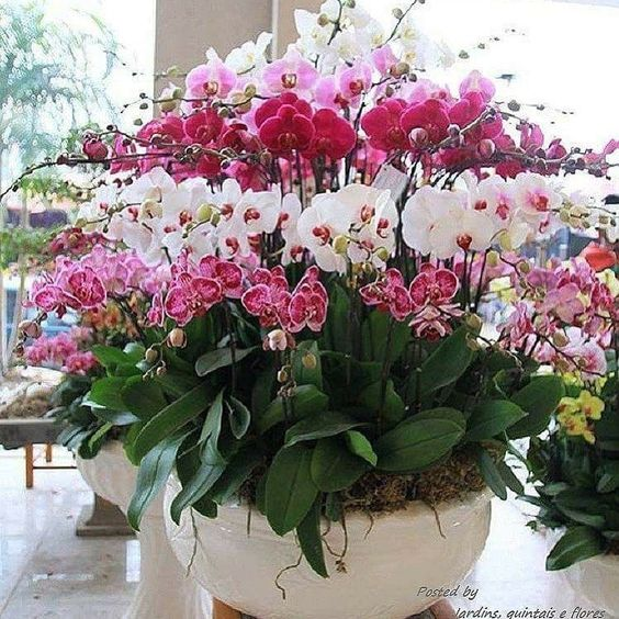 mnóstwo orchidei