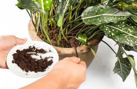fusy od kawy dla roślin