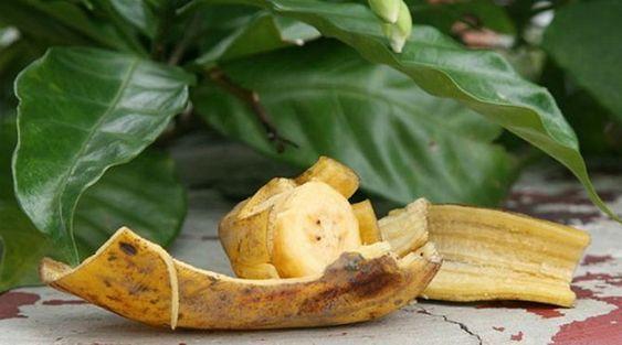 skórki banana dla roślin