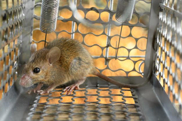mysz w łapce