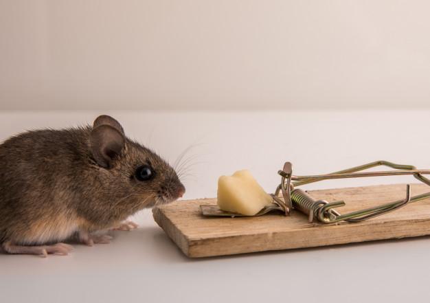 mysz przy łapce