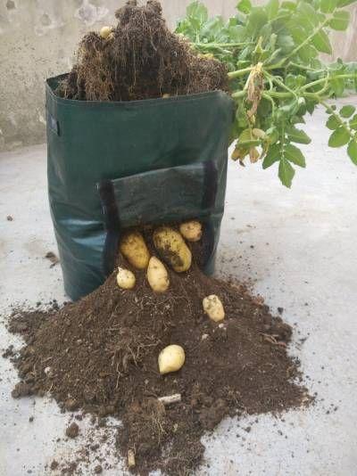 ziemniaki w workach