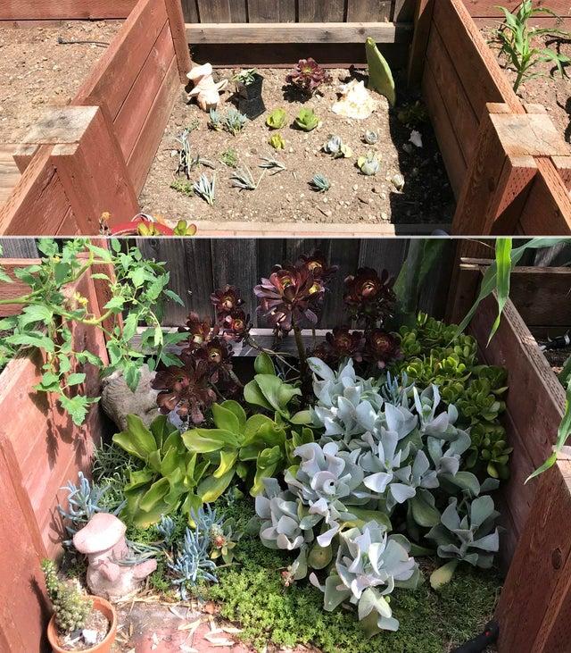 rośliny 2 lata przed i po