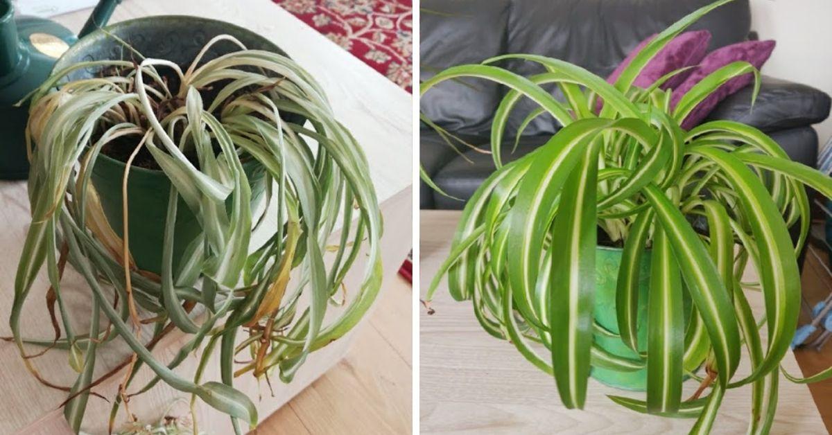 odratowane rośliny