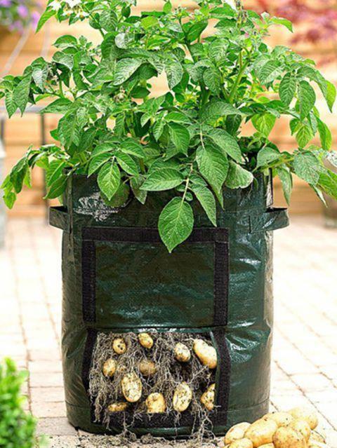 aktywności outdoorowe ziemniaki w worku