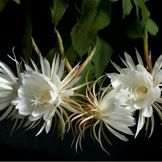 11 kwiatów, które kwitną tylko nocą. Cudownie pachną i nadają się do ogródka!