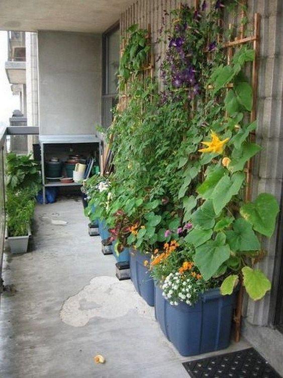 warzywa na balkonie