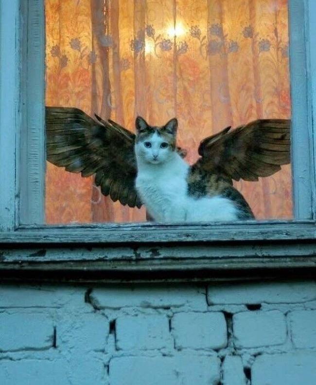 kot anioł