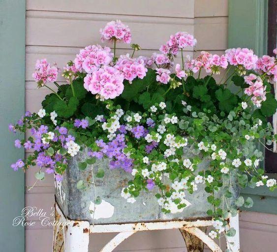 kwiaty w pojemniku