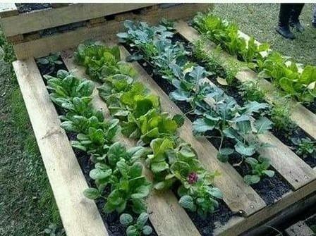 18 różnych pomysłów na wykorzystanie palet w ogrodzie, które wykonasz sam