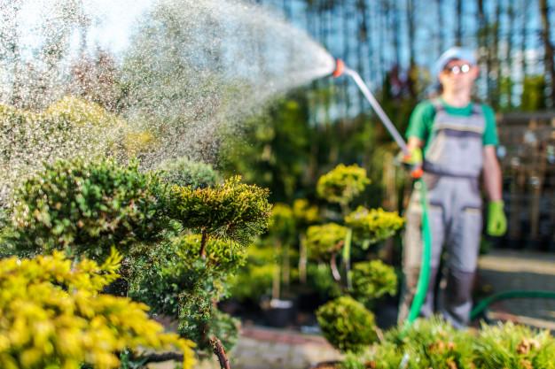 mężczyzna podlewa ogród
