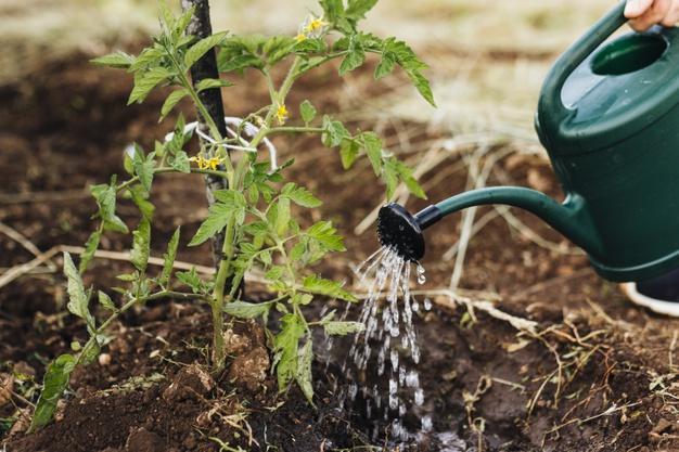 podlewania roślin konewką