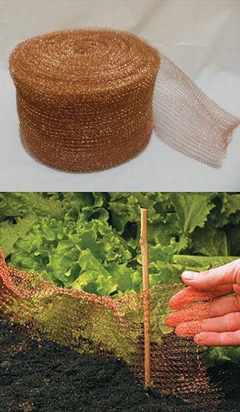 Taśma miedziana – najskuteczniejszy sposób na ochronę roślin przed ślimakami