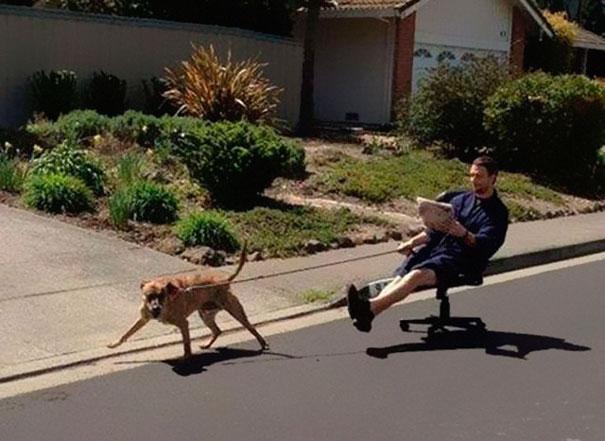 pies ciągnie mężczyznę