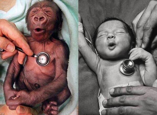 goryl i noworodek