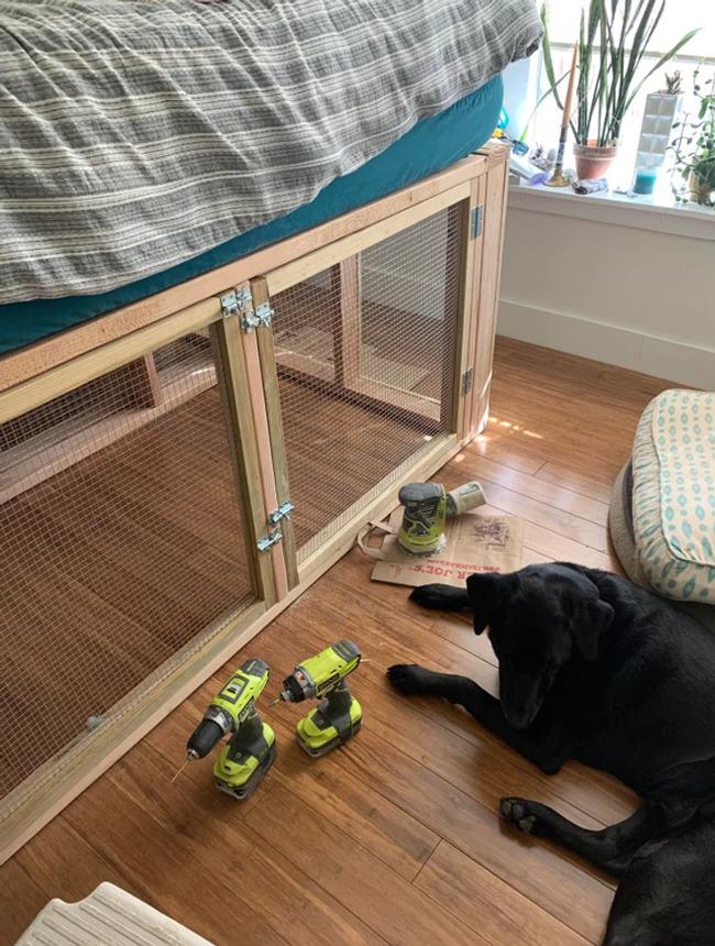 pies w pokoju