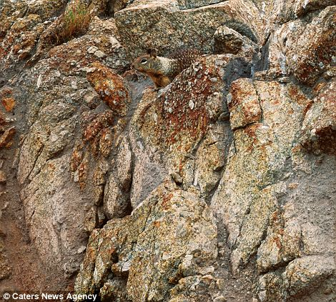 10 mistrzów kamuflażu ze świata zwierząt. Dostrzeżesz ukryte stworzenia?
