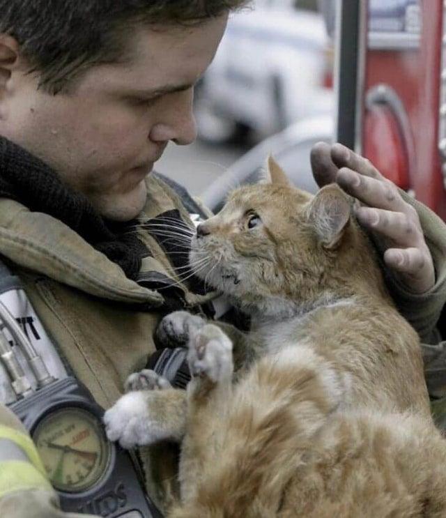 strażak z kotem