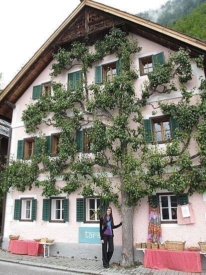 drzewo przy budynku