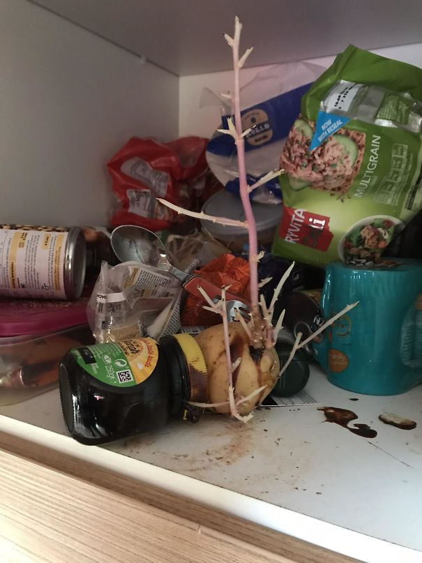 ziemniak w szafce