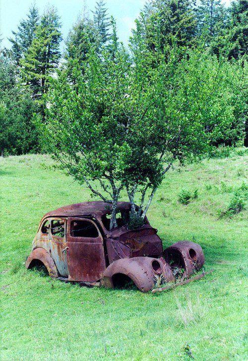 drzewa w aucie