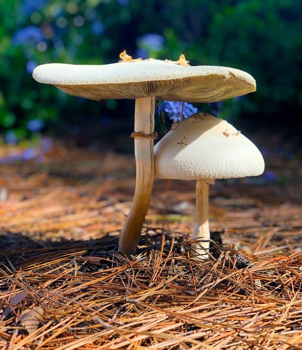 grzyby w ogrodzie